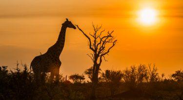Shutterstock 770258203